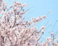 春の入会キャンペーン実施中! 4/1~5/31まで